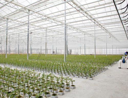 Trandos Hydroponic Growers (WA)