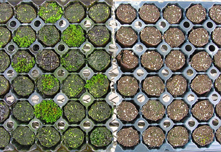 Aqua-Hort Study into Algae Growth