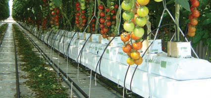Steel Guttering For Greenhouse Crops Ais Greenworks